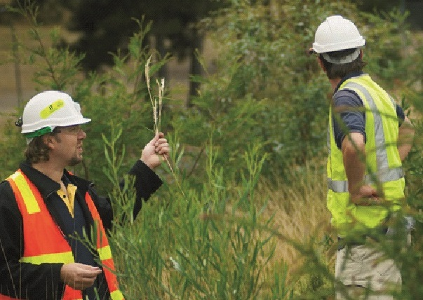 Ballarat Gold Mine Revegetation